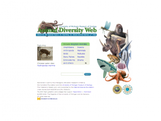 Animal Diversity Web screen shots