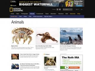 Screen shot - Wildlife Film Makers