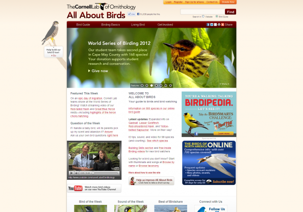 All About Birds screen shot